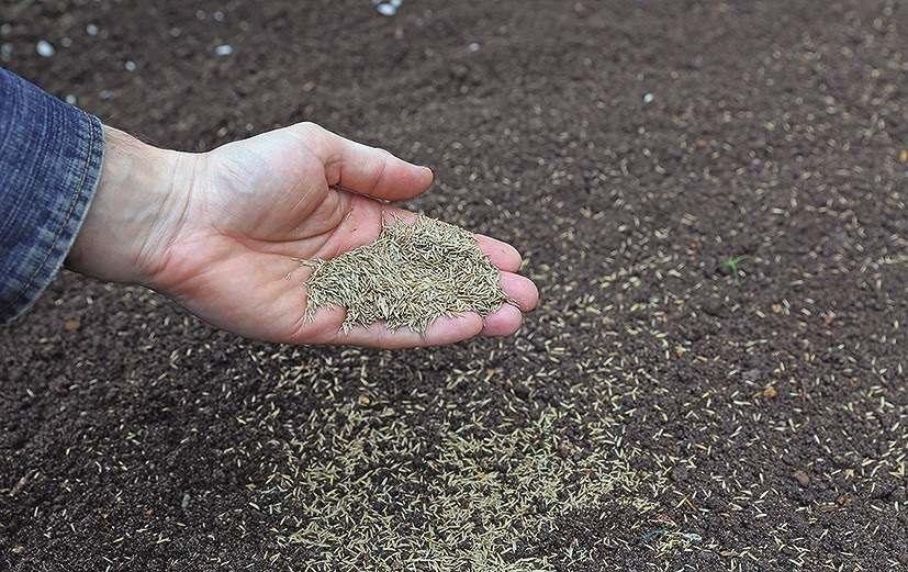 Trawnik z siewu to wybrane nasiona odpowiednio dobranych gatunków traw